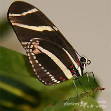 how to identify butterfly families gardens with wings