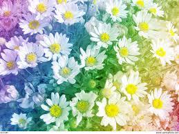 rainbow daisies wallpaper by syeramiktayee on deviantart