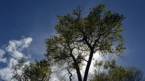 colorado arborist insurance orcutt insurance