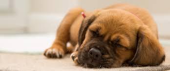 hartz pet products u0026 supplies hartz flea control for dog u0026 cat