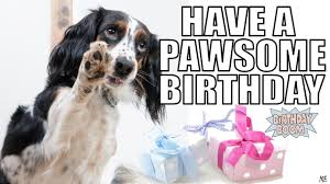 Birthday Animal Meme - funny happy birthday memes of dogs youtube