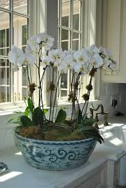 orchid arrangements decorating beautiful orchid arrangements for home decorating