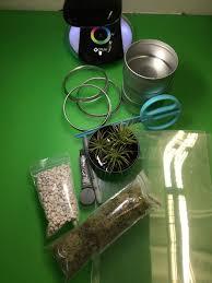 Diy Mini Desk Lamp Darby Smart Craft Mini Diy Terrariums U003e Ottlite U003e Ottlite Blog