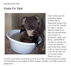 now let s not forget about gumnut the koala album on imgur