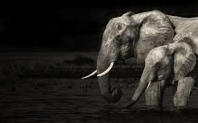 cool elephant wallpaper elephant full hd wallpaper and background image 1920x1200 id 237967