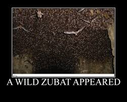 Zubat Meme - a wild zubat appeared pokémon know your meme