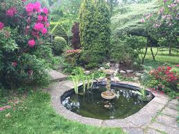 native uk pond plants pond maintenance pond clean dorset pond stars uk