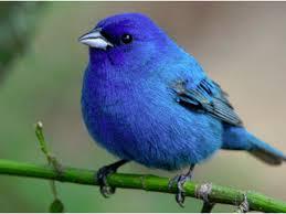 bluebird u0027s gene therapy is firing on all cylinders nasdaq blue