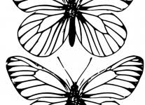 free printable butterfly templates wallpaper download