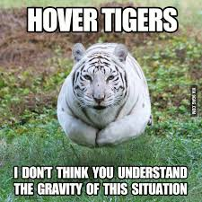 Funny Tiger Memes - hover tiger tigers memes and sports food