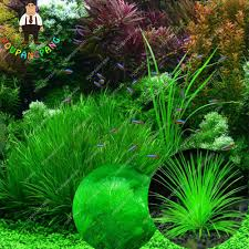 popular indoor plant seed buy cheap indoor plant seed lots from