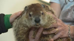 fun facts about why we celebrate groundhog day