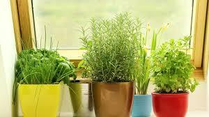 thirty diy indoor herb garden ideas