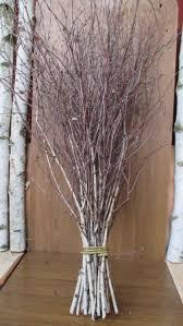 extra long birch twigsbirch twigsbirch tree branchesbirch