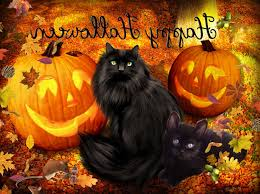 cat halloween background images free halloween wallpapers best wallpapers