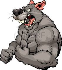 angry rat images u0026 stock pictures royalty free angry rat photos