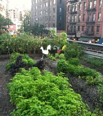 rooftop vegetable gardens crowdbuild for