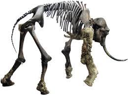 zhenya mammoth mammuthus primigenius blum taphonomy