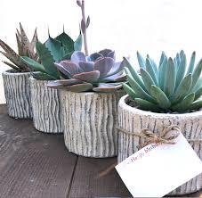 succulents meaning succulent planter ceramic container with succulent
