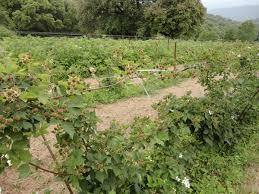chambre d agriculture corse du sud album ecole serra di ferro mai2012 etre agriculteur en corse du sud