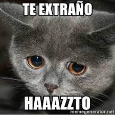 Angry Cat Meme Generator - cute cat meme generator cat best of the funny meme