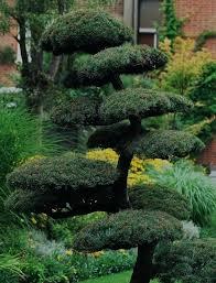 ornamental landscape trees mercadolibre club