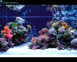 reef aquarium design design ideas photo gallery
