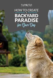 how to create a backyard paradise for your dog u2013 top dog tips