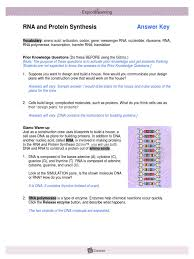 Dna Rna And Protein Synthesis Worksheet Rnaproteinsynthesisse Key Translation Biology Rna