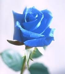 blue flower blue flower
