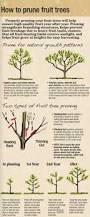 3387 best garden snippets images on pinterest gardening plants