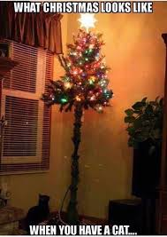 Cat Christmas Tree Meme - what christmas looks like when you have a cat holidays