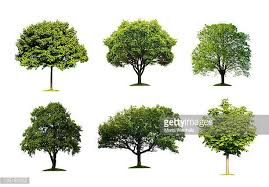 tree stock photos and pictures getty images