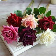 imagenes lindas naturaleza pin de shweta anand en flowers pinterest flor cosas lindas y