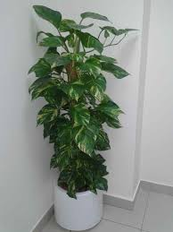Best Indoor House Plants Best Indoor Plants With Names And Easy To Plant Houseplants That