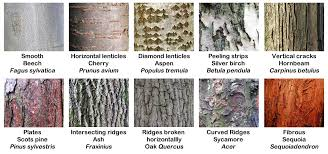 different types of trees absolutely barking