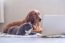 Meme Animals - 10 popular advice animals internet memes
