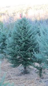 nichols trees