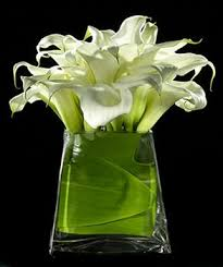 Flower Shops Inverness - 168 best flowers plants images on pinterest flower