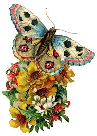 vintage butterfly clipart clipartxtras
