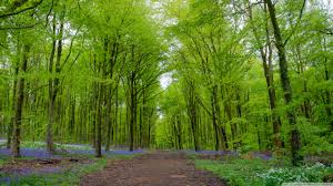 forest green trees spring 4k hd desktop wallpaper for 4k