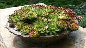 Kitchen Cactus Images Of Dish Garden Ideas And Kitchen Latest Gardening With