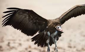 Seeking Vulture Scammers Targeting Families Seeking Affordable Housing Programs
