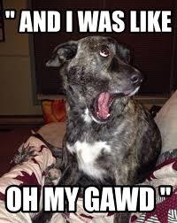 Funny Dog Face Meme - funny dog face meme 28 images 25 funny animal memes to make you