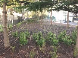 dj u0027s landscapes irrigation
