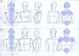 Male And Female Anatomy Female And Male Anatomy Proportions Head And Torso By Lucis7 On