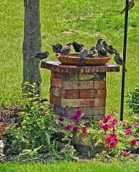 Bird Bath Decorating Ideas Best 25 Bird Bath Garden Ideas On Pinterest Flowering