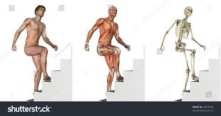 Pain Climbing Stairs by Anatomical Overlays Depicting Man Climbing Stairs Stock