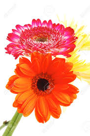 red and orange gerbera tuberose and gold mums flowers bouquet