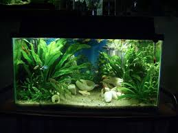 10 gallon planted tank led lighting ninjapenguin s planted tanks photo id 12473 full version